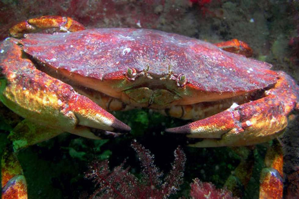crab - #wetrackthat HTI Acoustic Telemetry